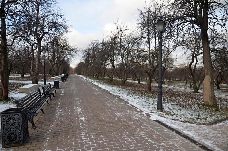 Около шести миллионов деревьев высадили в городе за восемь лет