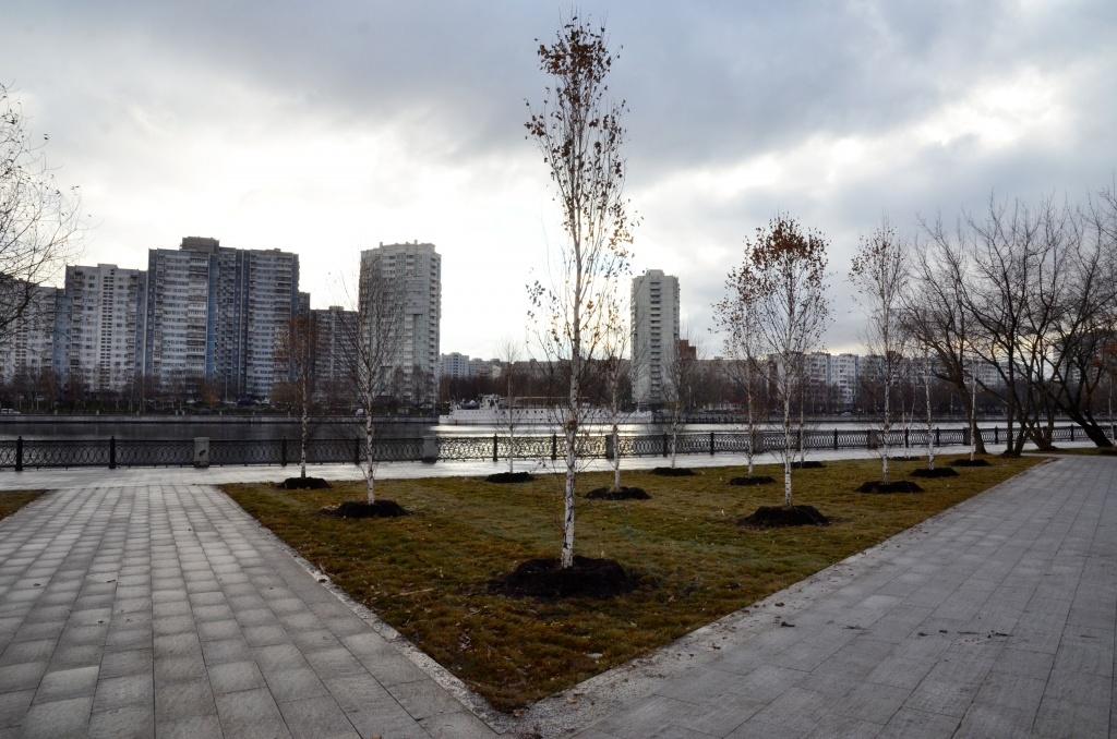 Более семи миллионов деревьев и кустарников посадили за восемь лет в Москве