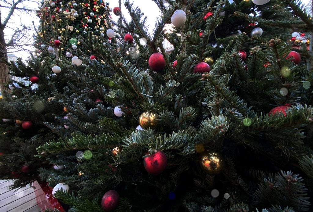 Экологическая акция по сбору новогодних елей пройдет в столице